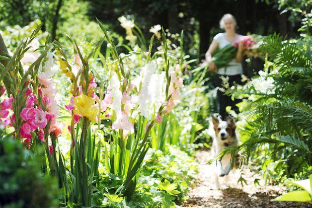 Perennial Pathway
