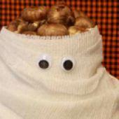 Mummy Bag: Creepy Crocus