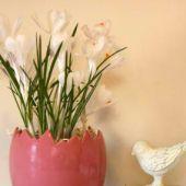 Indoor Potted Bulbs - Crocus