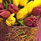 Easter Excelsior Vase